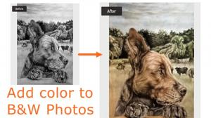 Black and White to Color Online with AI