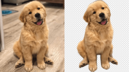 How to Remove & Edit Photo Background with Vance AI?